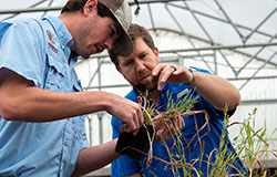 Weed science doctoral student Jake Patterson (left) and Dr. Connor Ferguson examine weeds grown in the greenhouse to determine herbicide effectiveness.