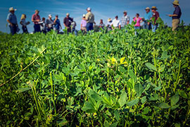 workshop in field of alfalfa