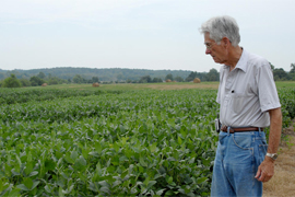 scientist looking over soybean in the field