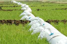 polypipe irrigating rice