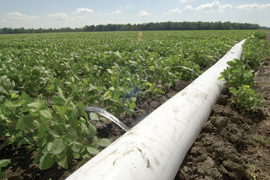 polypipe irrigating soybean