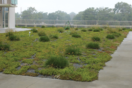 plants growing on green roof